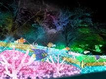 【山梨・神奈川】感動絶景スポットと人気の桔梗信玄餅詰め放題! 富士の絶景《新倉山浅間公園》と関東最大600万球の光の祭典《さがみ湖イルミリオン》に行く日帰りバスツアー