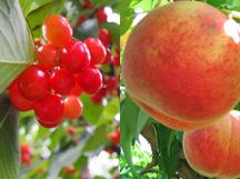 水陸両用車『KABAバス』