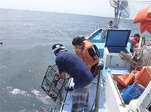 タコ網漁体験