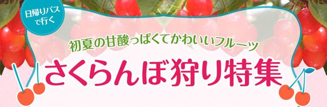 sp_slide_cherry02.jpg