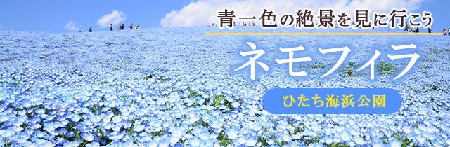 sp_slide_hitachikaihin02.jpg