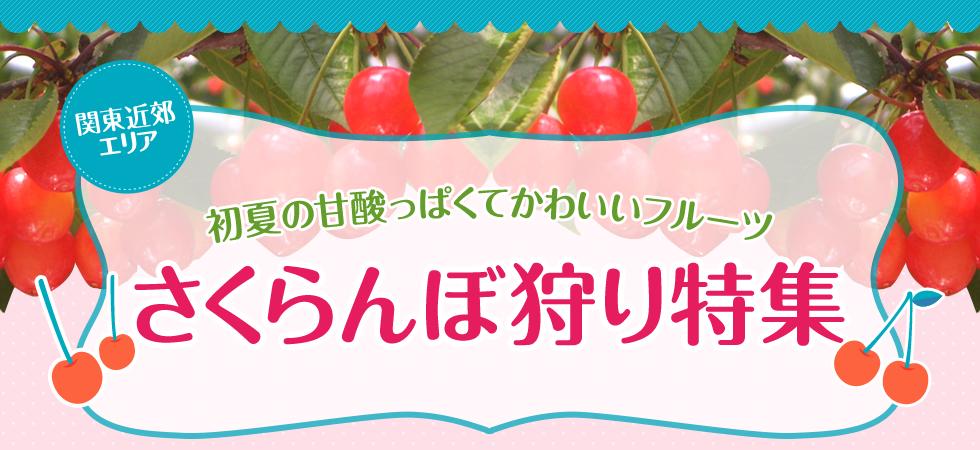 初夏の甘酸っぱくてかわいいフルーツ さくらんぼ狩り日帰りバスツアー特集