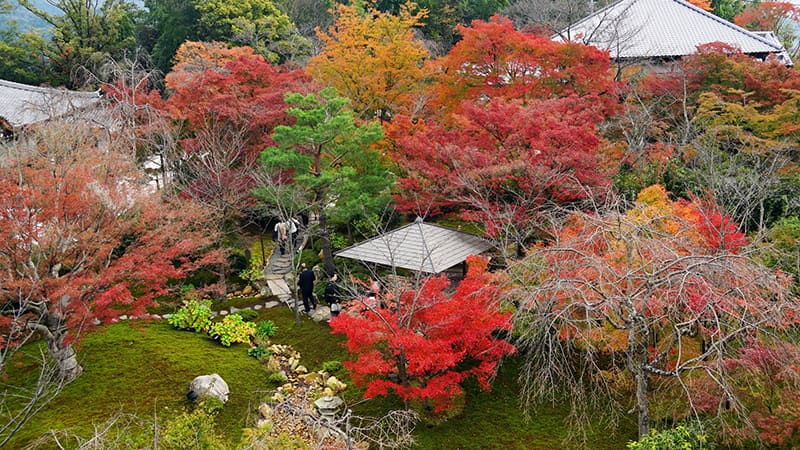 青龍殿庭園 紅葉